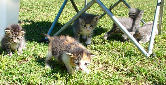 kittenbaby.com